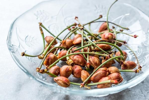 Noccioli-di-ciliegia-Sant'Orsola