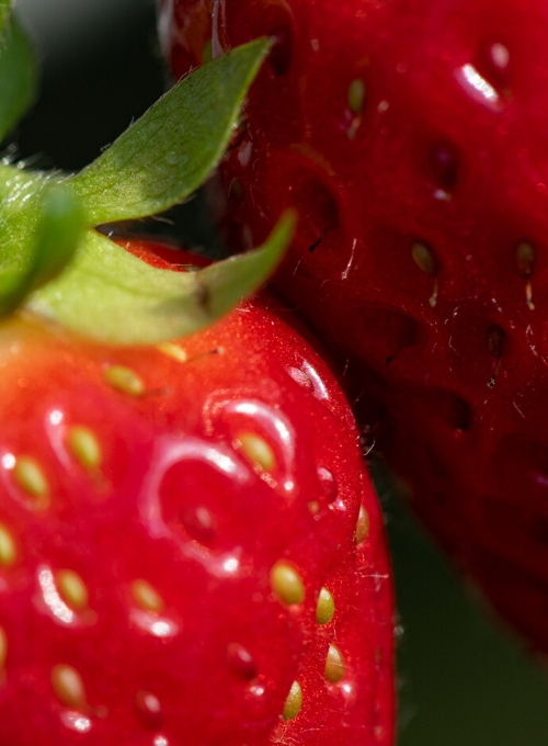 La-fragola-valori-nutrizionali-proprietà-e-benefici