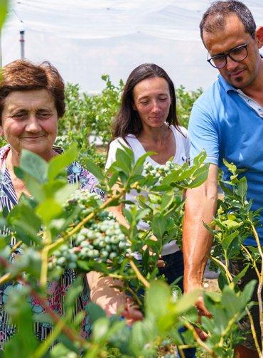 Storie-dai-campi-Sant'Orsola-Gianni-Malavolta-Marche-agricoltura-sostenibile-mirtilli