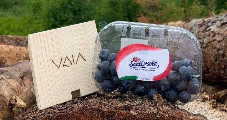 Vaia-SantOrsola-partner-supporter-Vaia-summer-week-Tempesta-Vaia-