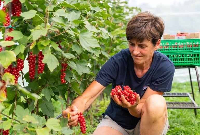 Renata-Bartolameotti-Storie-dai-campi-SantOrsola-ribes-rosso-agricoltura-sostenibile-produttori-piccoli-frutti