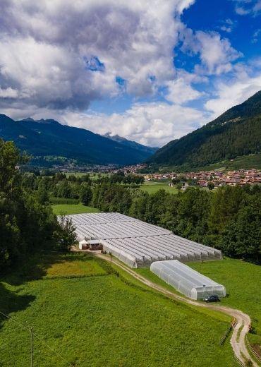 Sant'Orsola-Storie-dai-Campi-Produttori-Lorenzo-Costanzi-La-Contenta-Male-Val-di-Sole-lamponi-frutti-di-bosco-piccoli-frutti-agricoltura-sostenibile